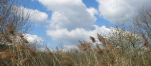 Gräser und Wolken sind die Themen in dieser Landschaft