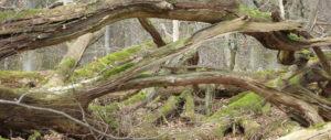 Äste am Teufelsbad im Harz