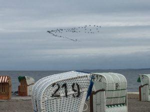 Strandkoerbe bei Hohwacht