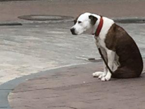 schwarz-weißer Hund