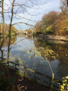 Stadtgraben im November