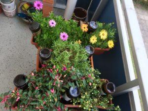 Flaschenblumen in Balkonkästen