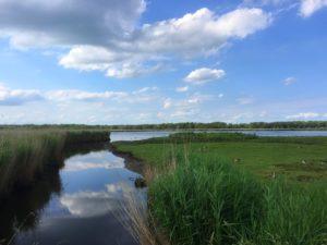 Das Lübecker Naturschutzgebiet Schellbruch