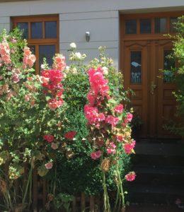 Die prachtvolle Stockrose vor einem Haus
