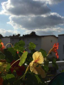 Balkon mit Kapuziner Kresse