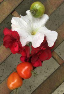 Tomaten und Blüten wie im Paradies
