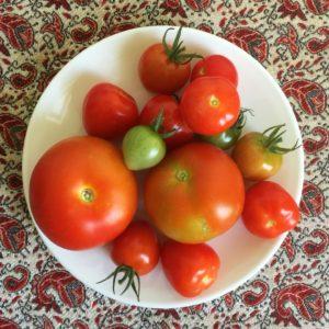 Tomaten aus dem kleinen Paradies