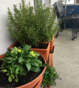 Balkon mit überwinterten Pflanzen