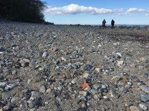 Strand voller Steine - bloß keine Symbolik