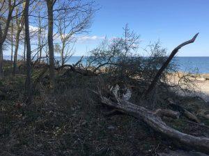 Umgestürzte Bäume am Strand